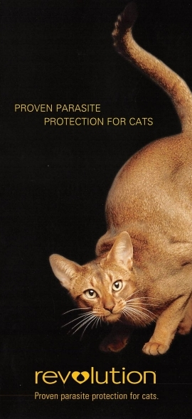 Revolution Cat Brochure 001