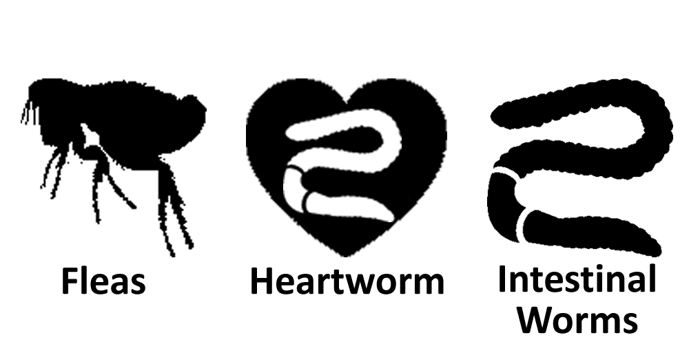 Fleas Heartworm Intestinal Worms